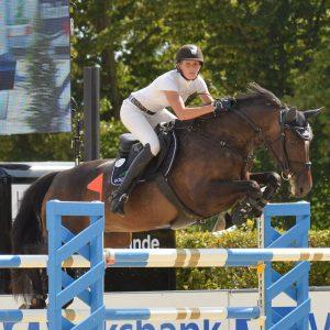 Springpferd, Sportpferd bis S** 145 cm
